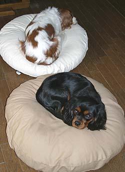 2004-11-26-01.jpg